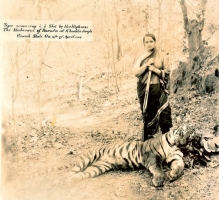 Maharanee Chimnabai Gaekwar of Baroda after hunting a tiger in the jungles of Rewah State in traditional navvari , ca 1940